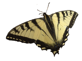 Schmetterling 4_2