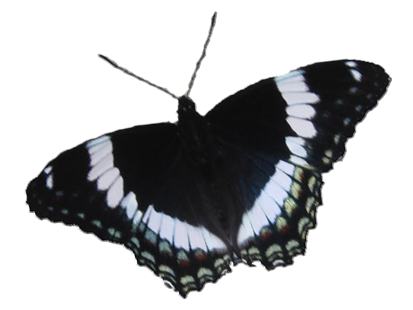 Schmetterling 6_1